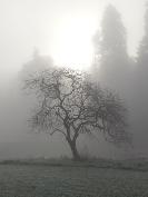 Irish-Winter-2014